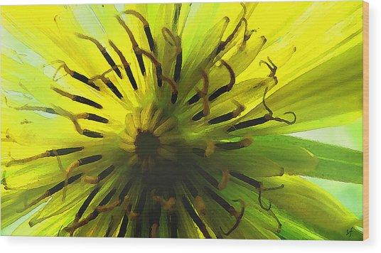 Wood Print featuring the digital art Inside A Yellow Goatsbeard  by Shelli Fitzpatrick