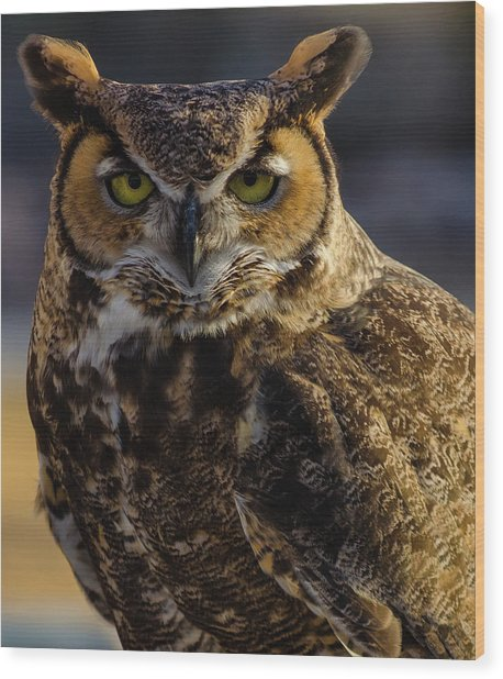 Intense Owl Wood Print