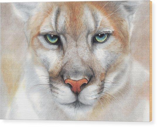 Intensity - Mountain Lion - Puma Wood Print