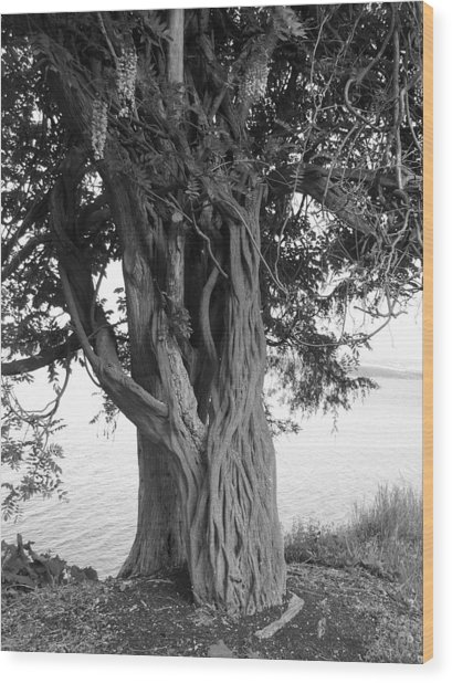 Intertwined For Life Black And White Wood Print by Jennifer Compton