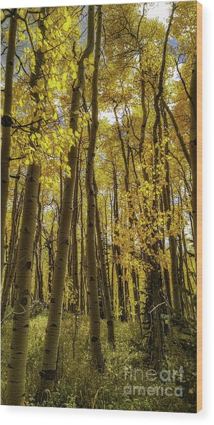 Into The Gold Wood Print