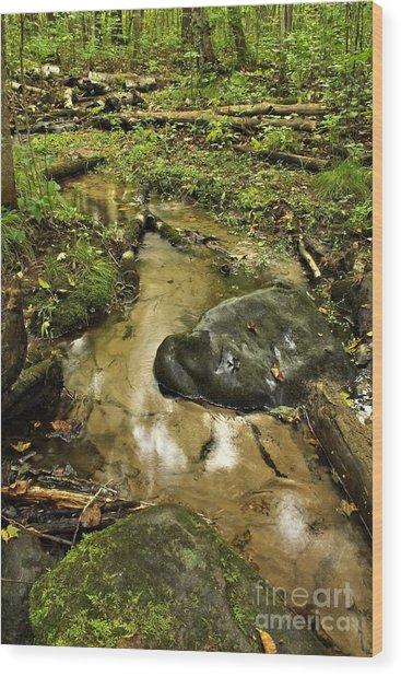 Into The Stream 8 Wood Print