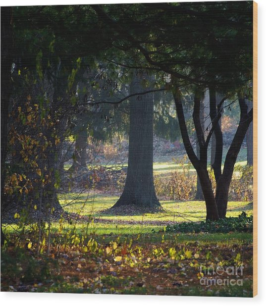Intrigued By The Light Wood Print