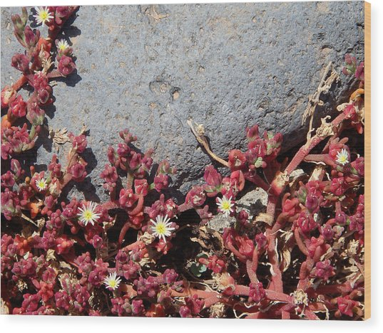 Invasion - Common Ice Plant Wood Print