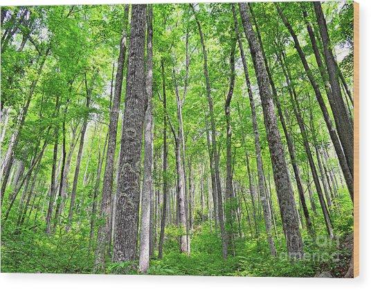 Invitation Wood Print