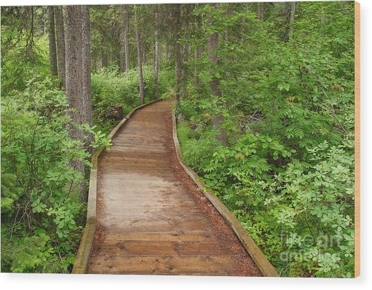 Inviting Path Wood Print