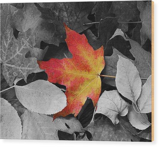 Iowa Autum Wood Print by Julie King