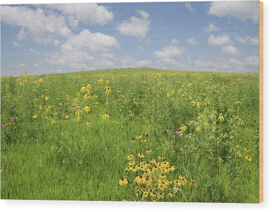 Iowa Summer Flowers I Wood Print