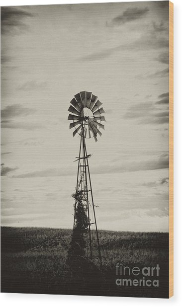 Iowa Windmill In A Corn Field Wood Print