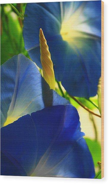 Ipomoea, Rising Sun Behind Wood Print