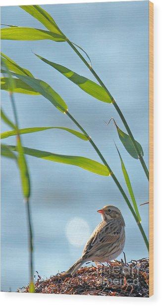 Ipswich Sparrow Wood Print