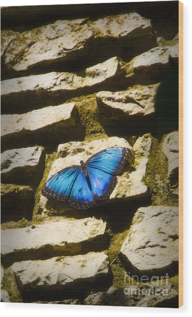 Iridescence-on-rocks Wood Print