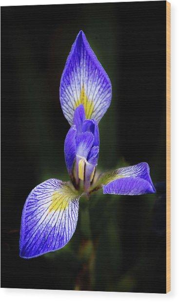 Iris #1 Wood Print