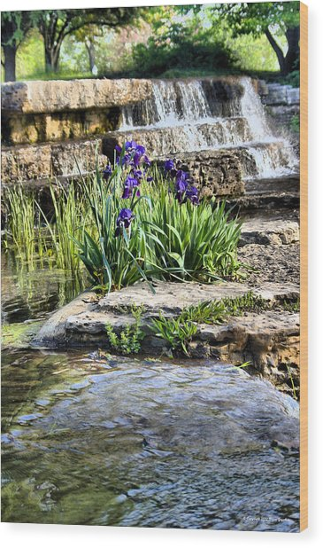 Wood Print featuring the photograph  Iris 1315hdr by Brian Gryphon