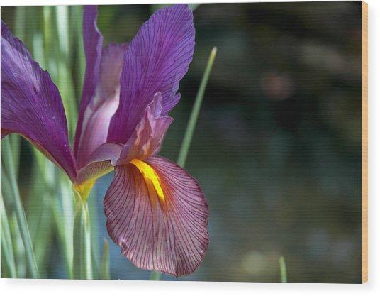 Iris 2 Wood Print by Mark Platt