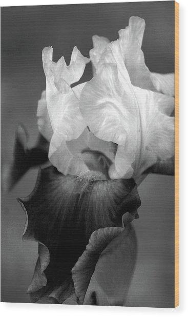 Iris 6621 H_5 Wood Print