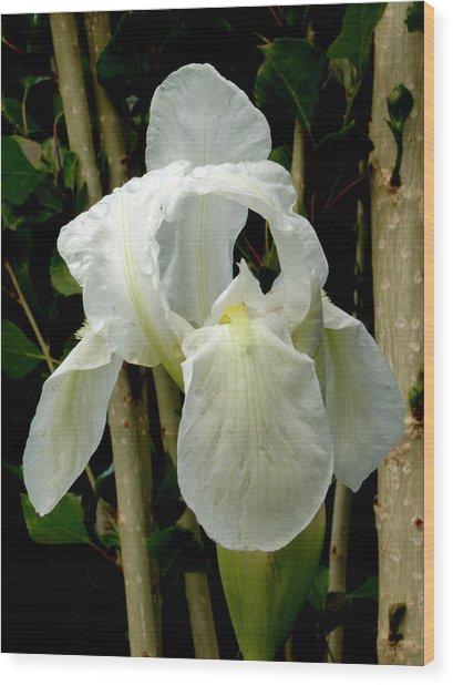 Iris After The Storm Wood Print