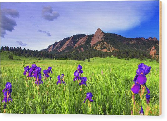 Iris And Flatirons Wood Print