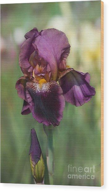 Iris 'black Ruby' Wood Print