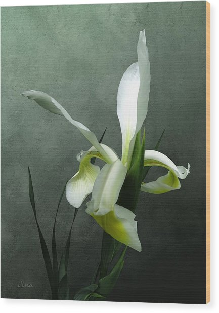 Iris Celebration Wood Print
