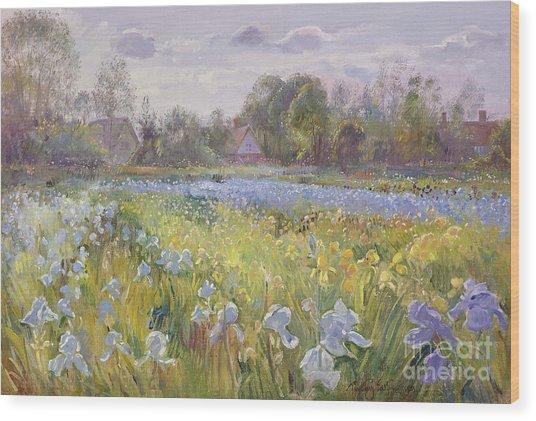 Iris Field In The Evening Light Wood Print