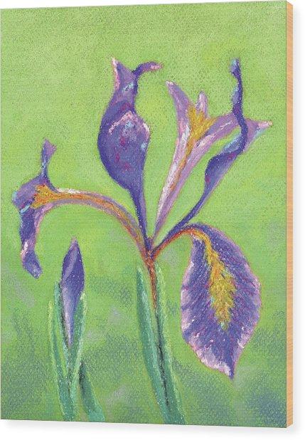 Iris For Iris Wood Print