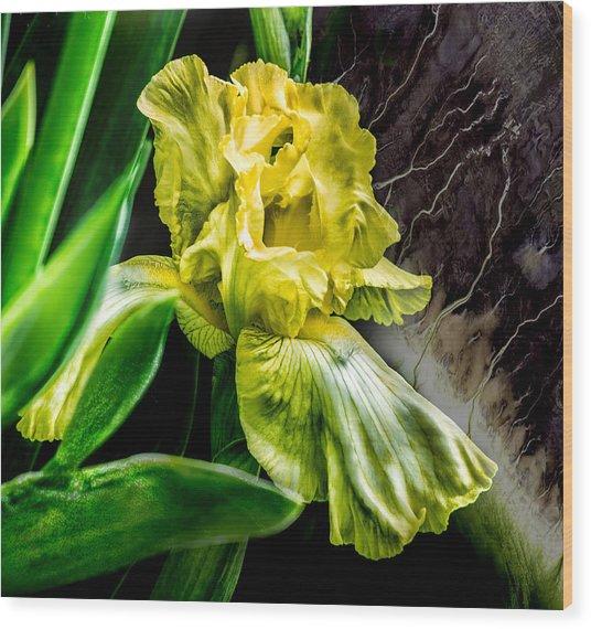 Iris In Bloom Two Wood Print