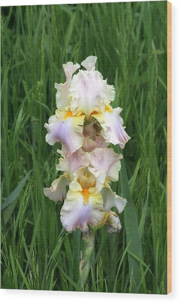 Iris In Grass Wood Print by George Ferrell
