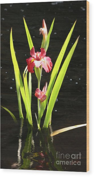 Iris In Water Wood Print