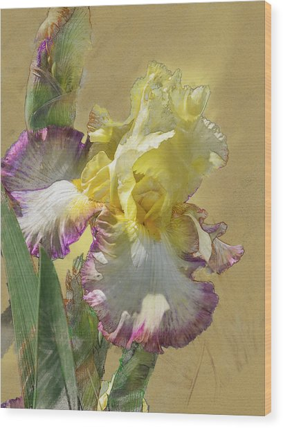 Iris, 'kiss Of Kisses' Wood Print