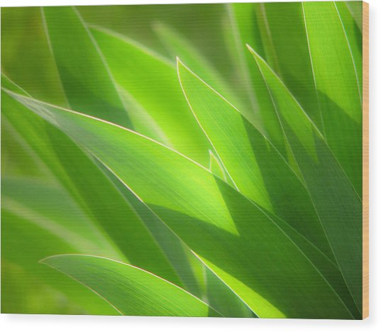 Iris Leaves Wood Print