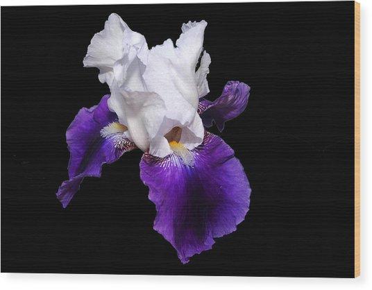 Iris Number One Wood Print