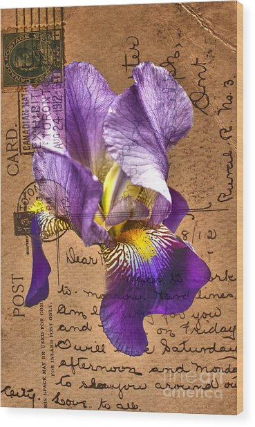 Iris On Vintage 1912 Postcard Wood Print
