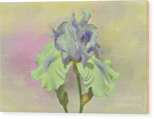 Iris Pastels Wood Print