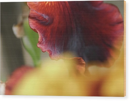 Iris Petals 2 -  Wood Print