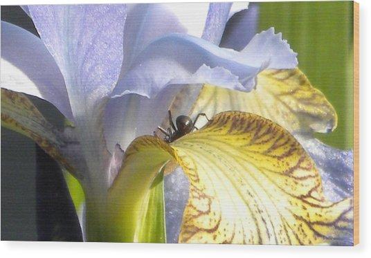 Iris Spider Wood Print by Karen Moulder
