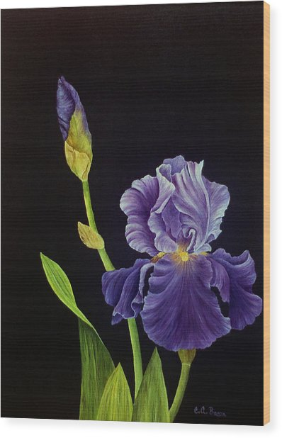Iris With Purple Ruffles Wood Print