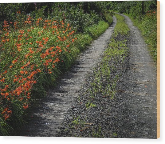 Wood Print featuring the photograph Irish Country Road Lined With Wildflowers by James Truett