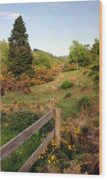 Irish Countryside Wood Print by Michael  Cryer