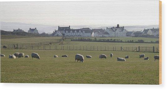 Irish Sheep Farm Wood Print