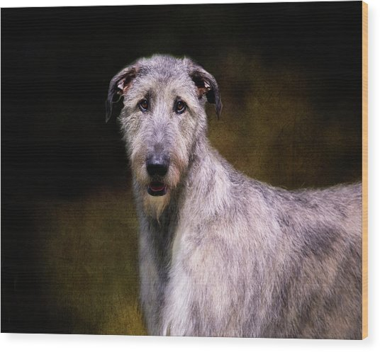 Irish Wolfhound Portrait Wood Print