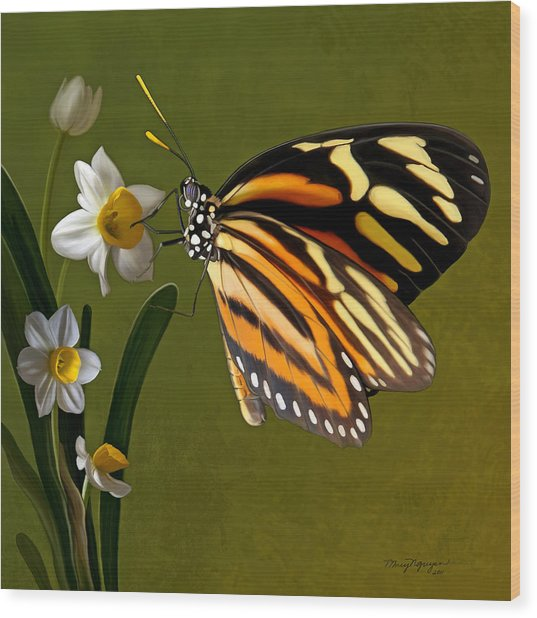 Isabella Tiger Butterfly Wood Print