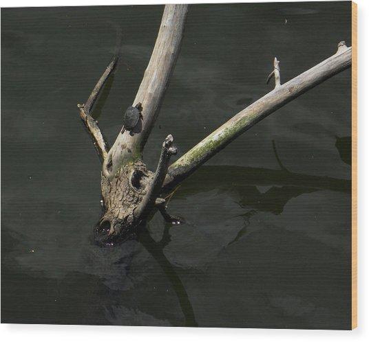 Island Sanctuary Wood Print