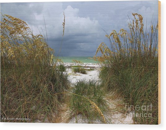 Island Trail Out To The Beach Wood Print