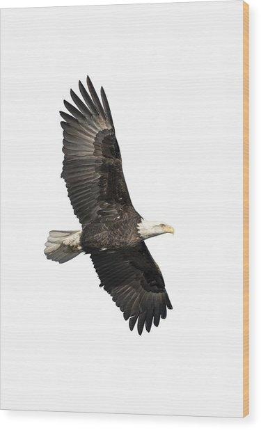 Isolated American Bald Eagle 2016-4 Wood Print