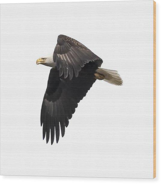 Isolated American Bald Eagle 2016-6 Wood Print