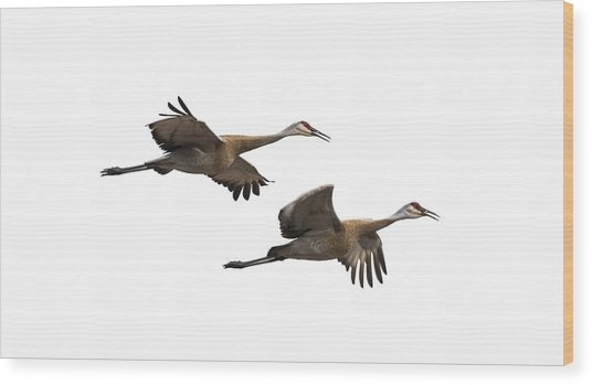 Isolated Sandhill Cranes 2016-1 Wood Print