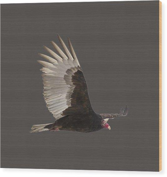 Isolated Turkey Vulture 2014-1 Wood Print