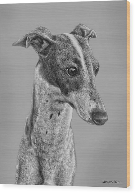 Italian Grayhound 2 Wood Print