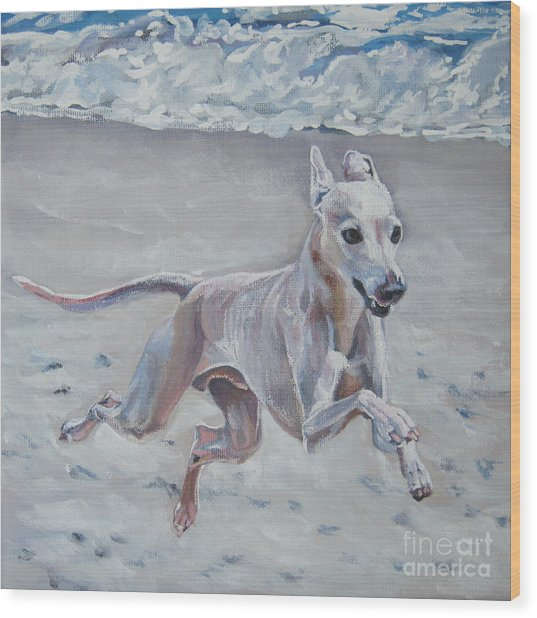 Italian Greyhound On The Beach Wood Print
